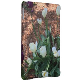 Garden of snow white tulip flowers