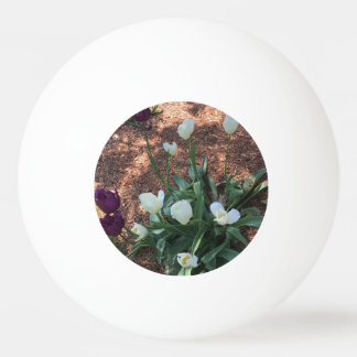 Garden of snow white tulip flowers ping pong ball