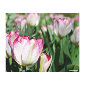 Garden of Tulips Canvas Print