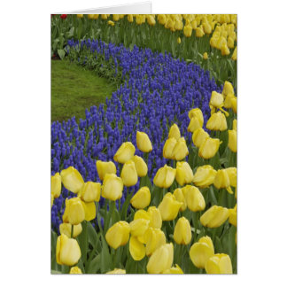 Garden pattern of Grape Hyacinth flowers and Card
