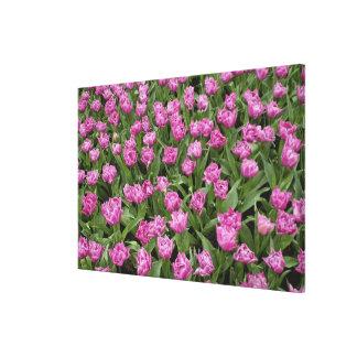 Garden pattern of tulips, Keukenhof Gardens, Stretched Canvas Prints