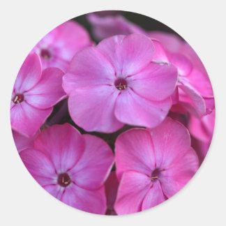 Garden phlox  (Phlox paniculata) Classic Round Sticker