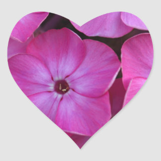 Garden phlox  (Phlox paniculata) Heart Sticker