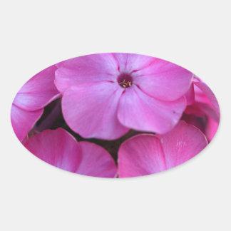 Garden phlox  (Phlox paniculata) Oval Sticker