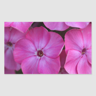 Garden phlox  (Phlox paniculata) Rectangular Sticker