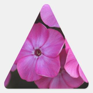 Garden phlox  (Phlox paniculata) Triangle Sticker