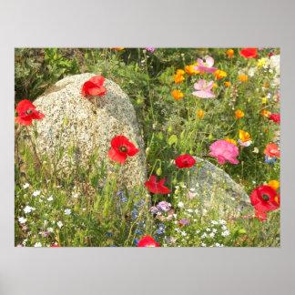 Garden Poppies Floral Poster