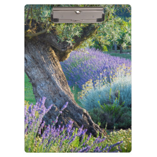 Garden scenic with flowers, France Clipboard