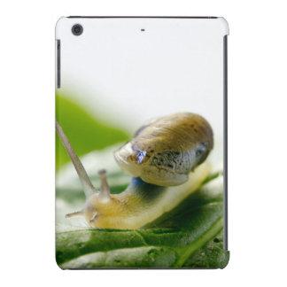 Garden snail on radish, California iPad Mini Cases