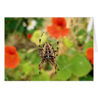 Garden Spider Card