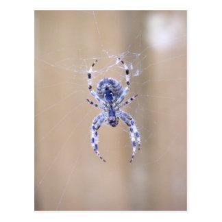 Garden Spider Postcard