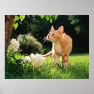 Garden Walk Tabby Cat Print