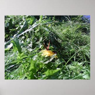 Garden Weeds Choking Garden Poster Print