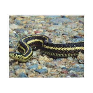 Gardener Snake Canvas Print