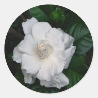 Gardenia Print Sticker