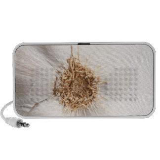 Garlic bulb mini speakers