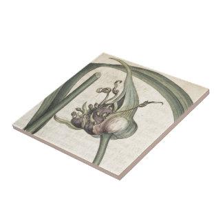Garlic Ceramic Tile