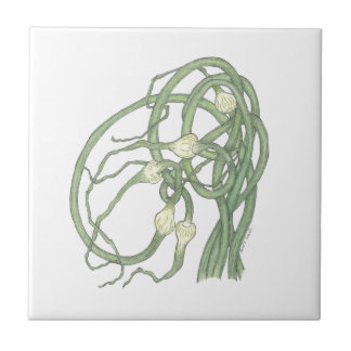 Garlic Scapes (Allium sativa) Tile