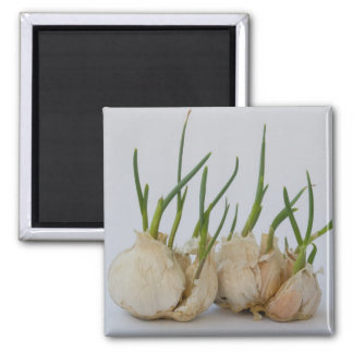 garlics square magnet
