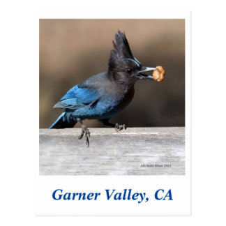 Garner Valley Postcard