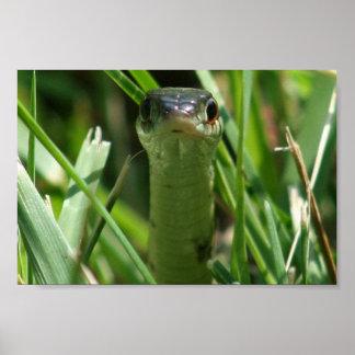 Garter Snake in the Grass Poster