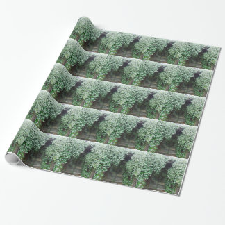Gate Covered in Jasmine Wrapping Paper