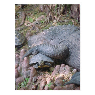 """Gator Hugs"" Postcard"
