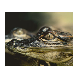 Gator in the Swamp Wood Print