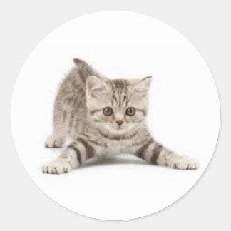 Gatos Round Sticker