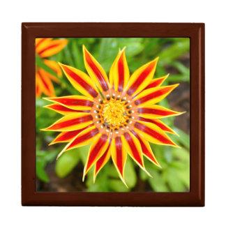 Gazania Flower Gift Box