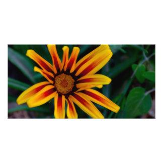 Gazania flower photo card
