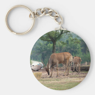 Gazelle, wild animal zoo,羚. key ring