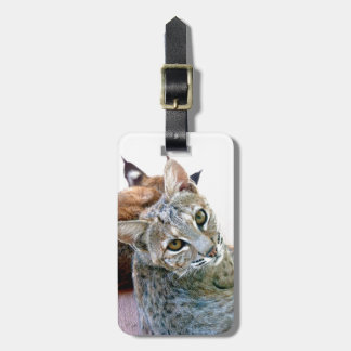 Gazely Stare | Bobcat Baggage Tag