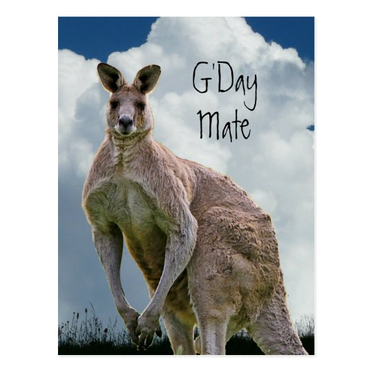 G Day Mate Kangaroo Postcard Zazzle Com Au