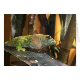 gecko notecard