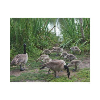 Geese and Goslings Canvas
