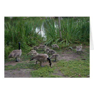 Geese and Goslings Card