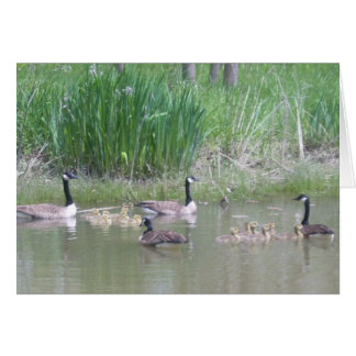Geese and Goslings on a Pond Card