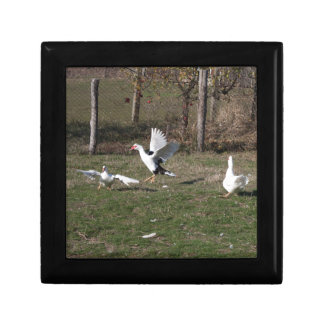 Geese fighting gift box