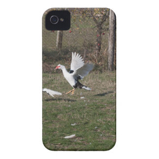 Geese fighting iPhone 4 case