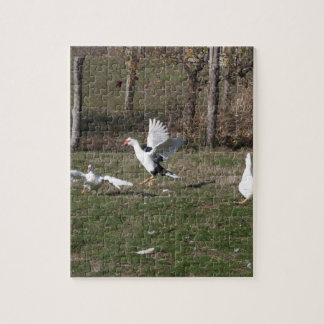 Geese fighting jigsaw puzzle