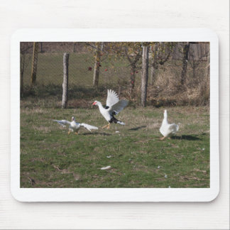 Geese fighting mouse pad