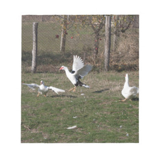 Geese fighting notepad