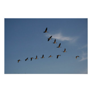 Geese in Flight Print