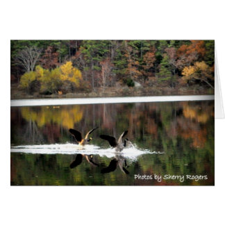 ~Geese on Clayton Lake~ Card