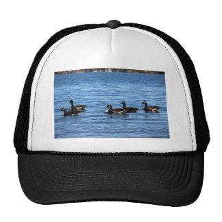 Geese on Lake Cap