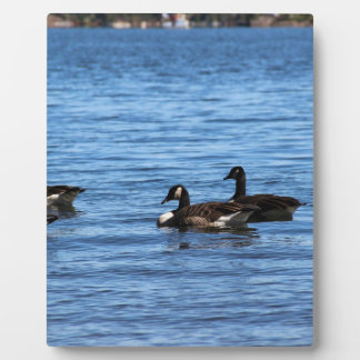 Geese on Lake Plaque