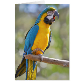 Gelbbrustara macaw on perch card