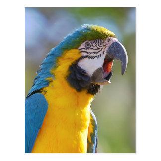 Gelbbrustara macaw on perch postcard