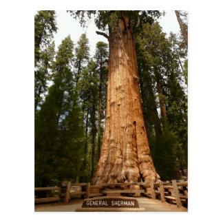 General Sherman Giant Sequoia Postcard